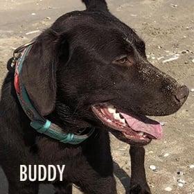 f1fd5689e2e Exclusieve hondenhalsbanden en hondenriemen| Dog with a Mission ...
