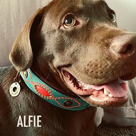1b94a22ef6a Exclusieve hondenhalsbanden en hondenriemen| Dog with a Mission- DWAM - Dog  with a Mission.com