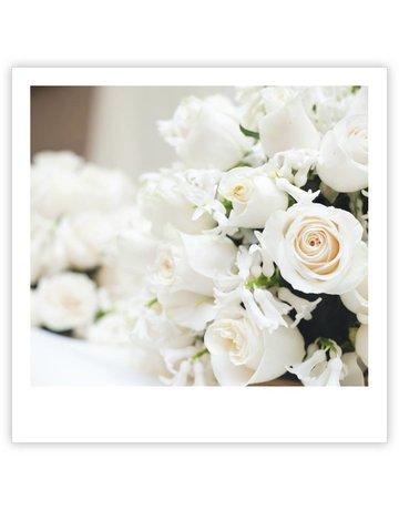 Witte rozen Quatro 12 St.