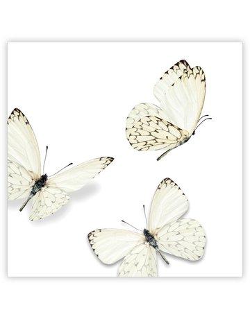 Vlinder Quatro 12 St.