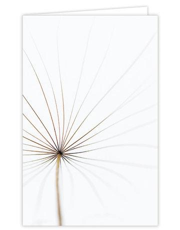 Dandelion Groot Formaat kaart 12 St.