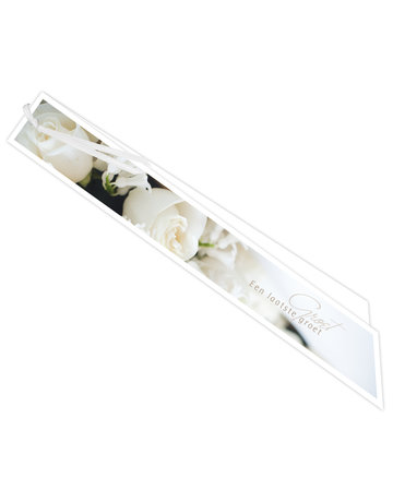 Witte rozen Big Ribbon 6 St.