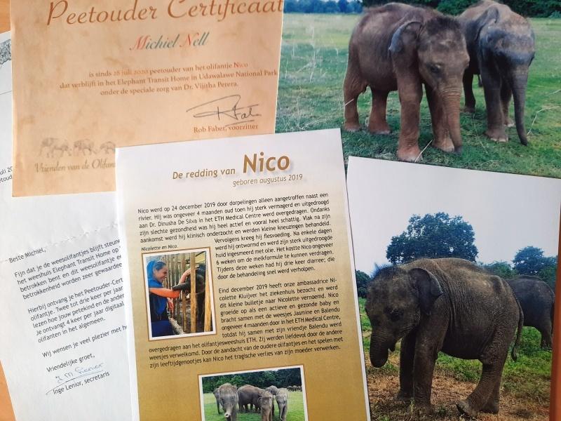 Peetouder Olifant Nico - Virenden van de Olifant
