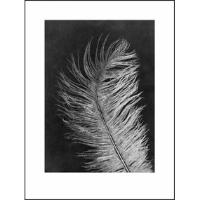 Pernille Folcarelli Feather white print