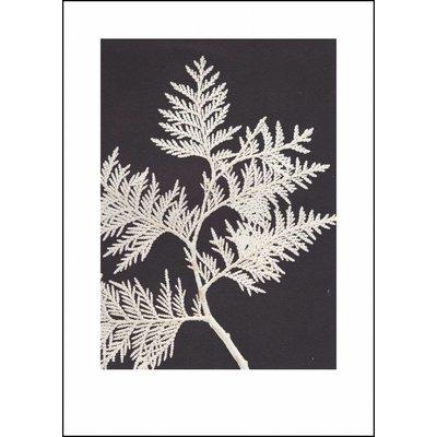 Pernille Folcarelli print witte levensboom
