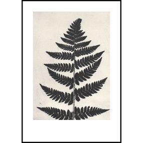Pernille Folcarelli Fern black print - discontinued