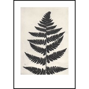 Pernille Folcarelli poster zwarte varen - eindereeks