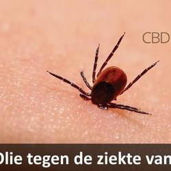 CBD Olie tegen ziekte van Lyme