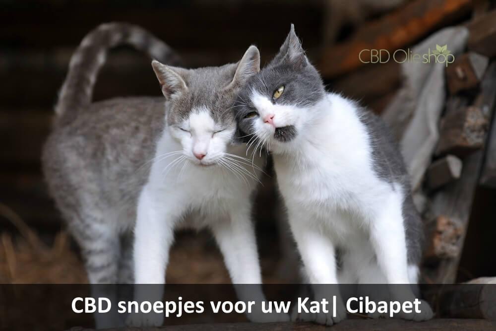 Cibapet CBD snoepjes Kat