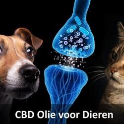 CBD Olie dieren