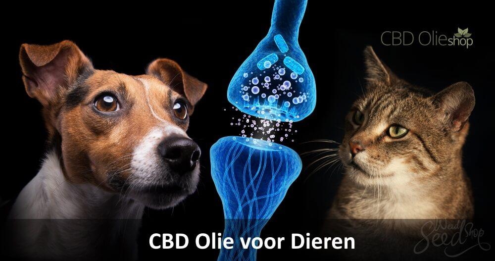 CBD Olie voor dieren