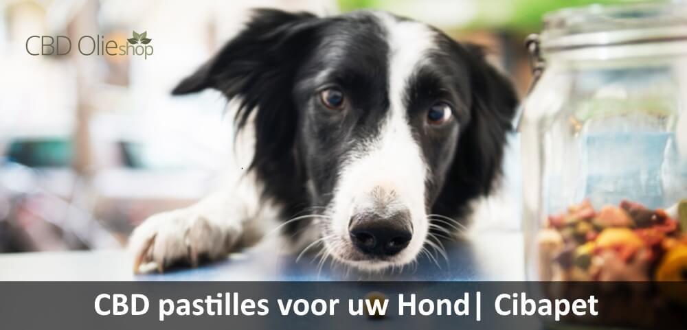 CBD Pastilles voor Hond