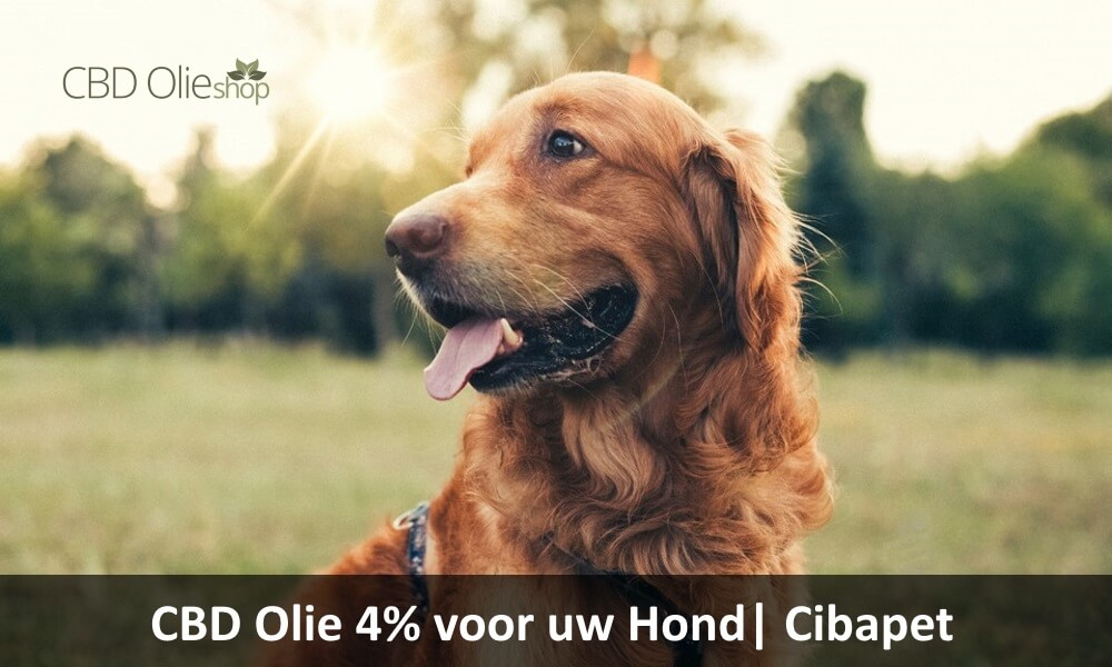 CBD Olie 4% voor Hond