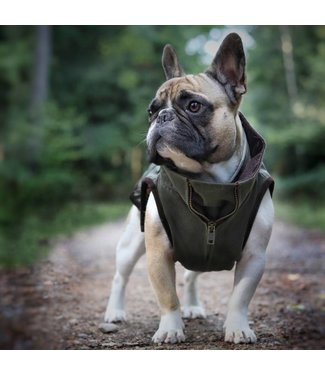 Dogissimo Windsor Jacket - Army - French Bulldog