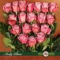 Roos Moody Blues, paars, uit Ecuador