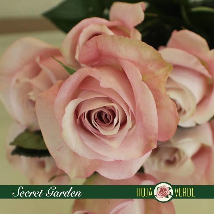 Roos Secret Garden
