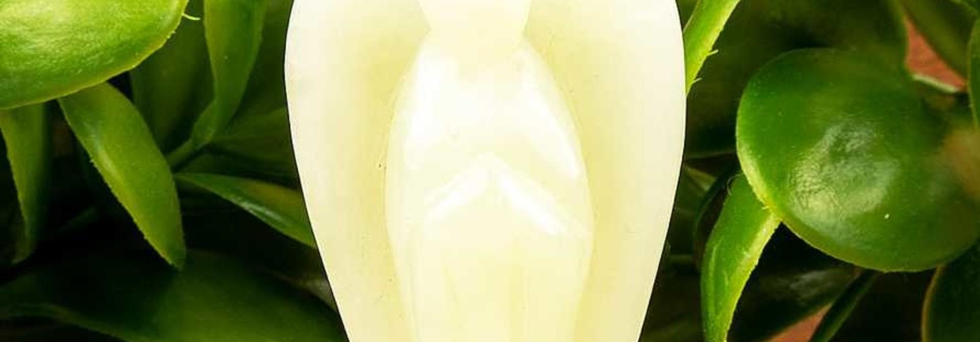 Jade Engel - 5,5 cm