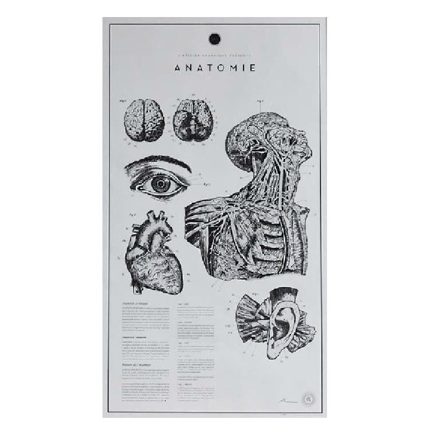 ANATOMIE LITHOGRAPHS PRINT (UNFRAMED)