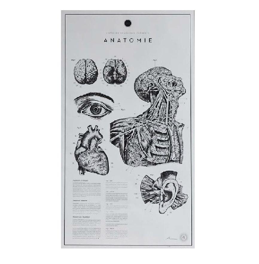 "ANATOMIE LITHOGRAPHS PRINT 挂画""解剖"" (無裱框)"