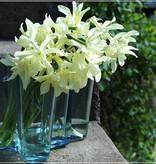AALTO VASE 湖水綠色玻璃花瓶 (高95毫米)
