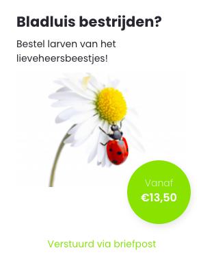 Lieveheersbeestjes bestellen