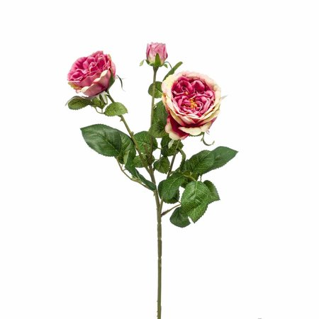 Rose Branch rose