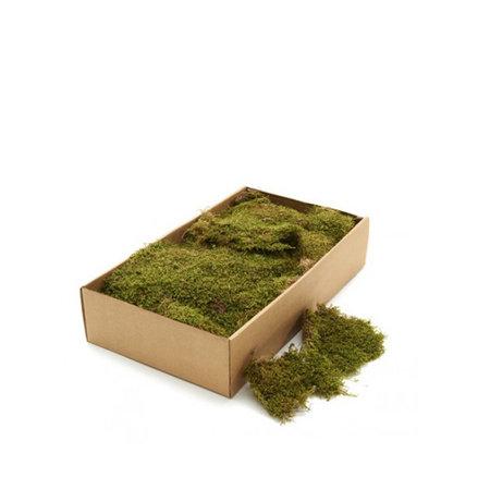 Dried moss 1 KG