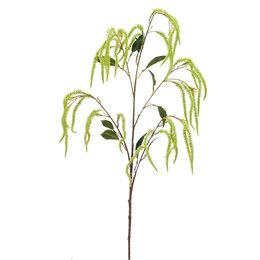 Amaranthus Tak