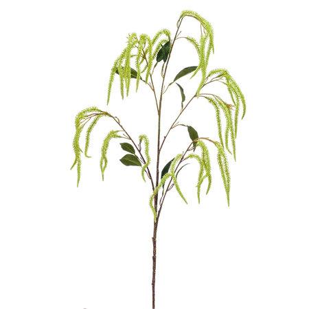 Amaranthus Branch
