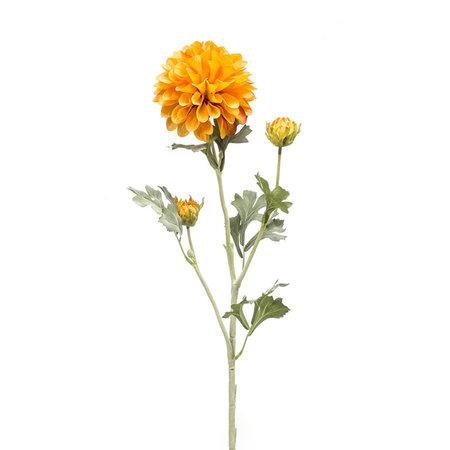 Dahlia Tak Geel yellow orange