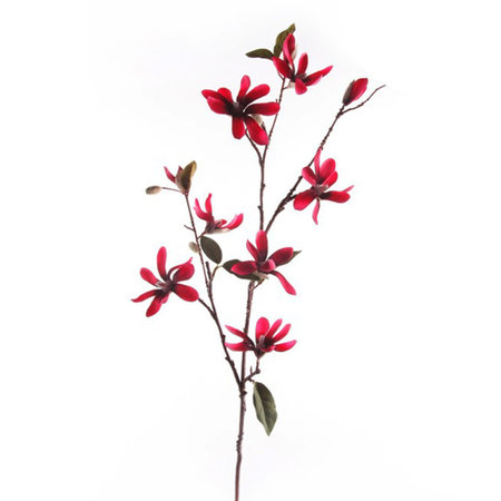 Magnolia Tak Beauty H90