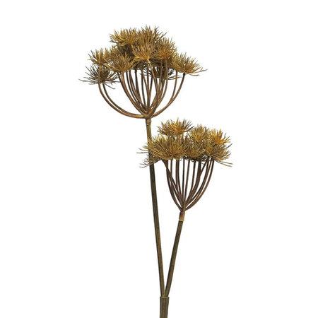Heracleum (2 branch)