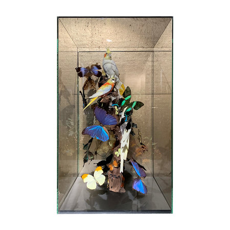 Exclusive bell jar with butterflies and parakeets