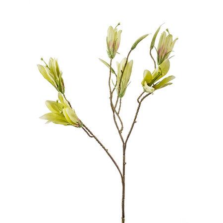 Lily wild Groen H70