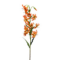 Lily spray Oranje H80