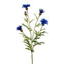 Centaurea tak Blauw H60