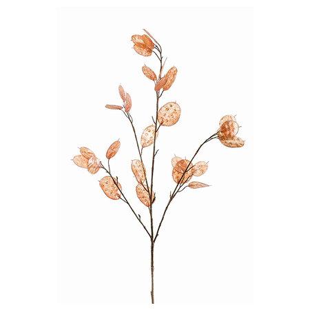 Lunaria Branch