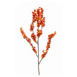 Berry Tak Oranje