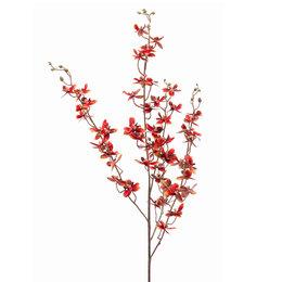 Dendrobium Branch