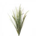 Liriope Grass bush