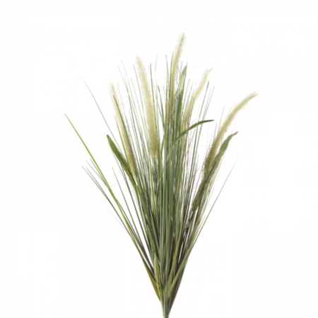 Liriope gras Steker