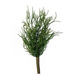 Rhipsalis Bush H20cm