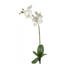 Orchidee tak