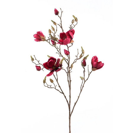 Magnolia Branch Red