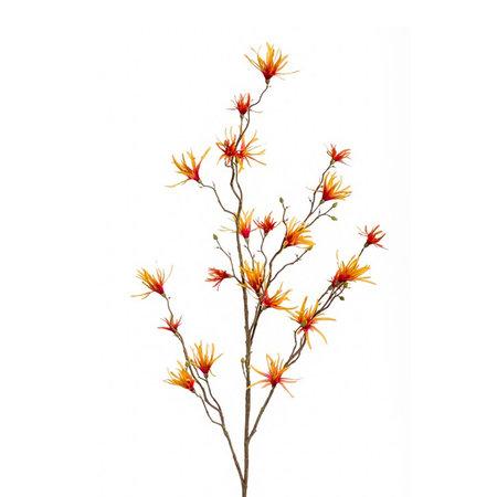 Hamamelis Branch