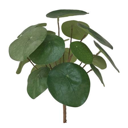 Pilea Branch