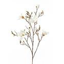 Magnolia Tak