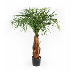 Areca Palm on stem