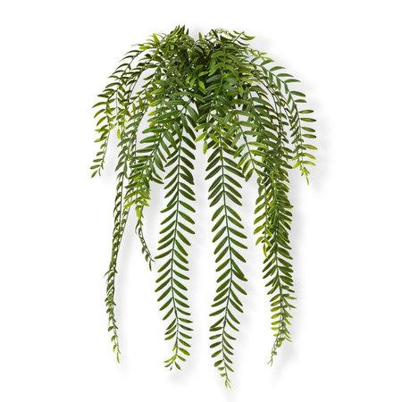 Columnea Hangplant
