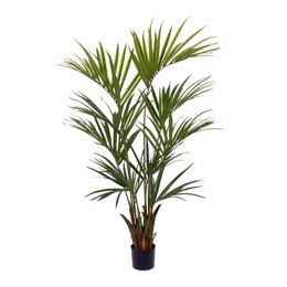 Kentia Palm Deluxe